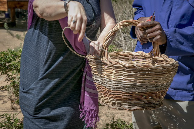 Weaving baskets with our own olive branches