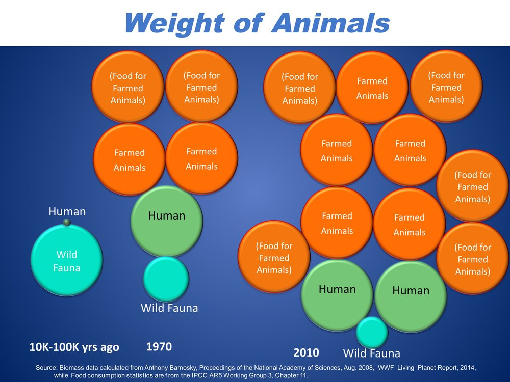 The Weight of Animals