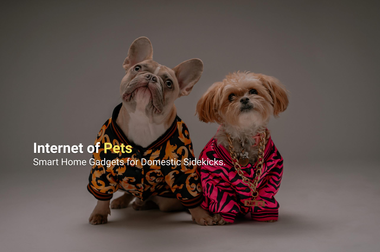 Internet of Pets