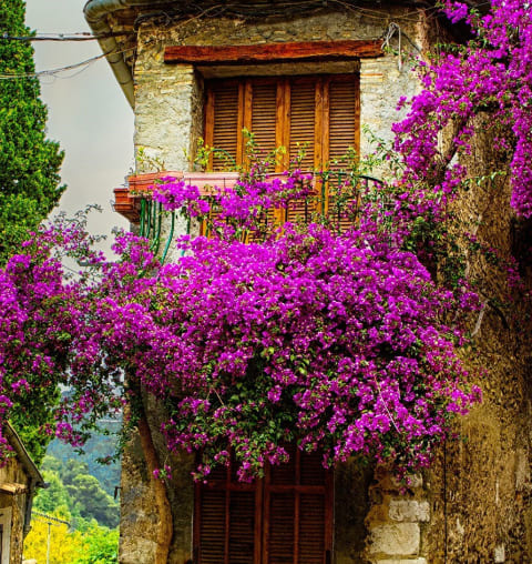 colors-of-provence-amacello