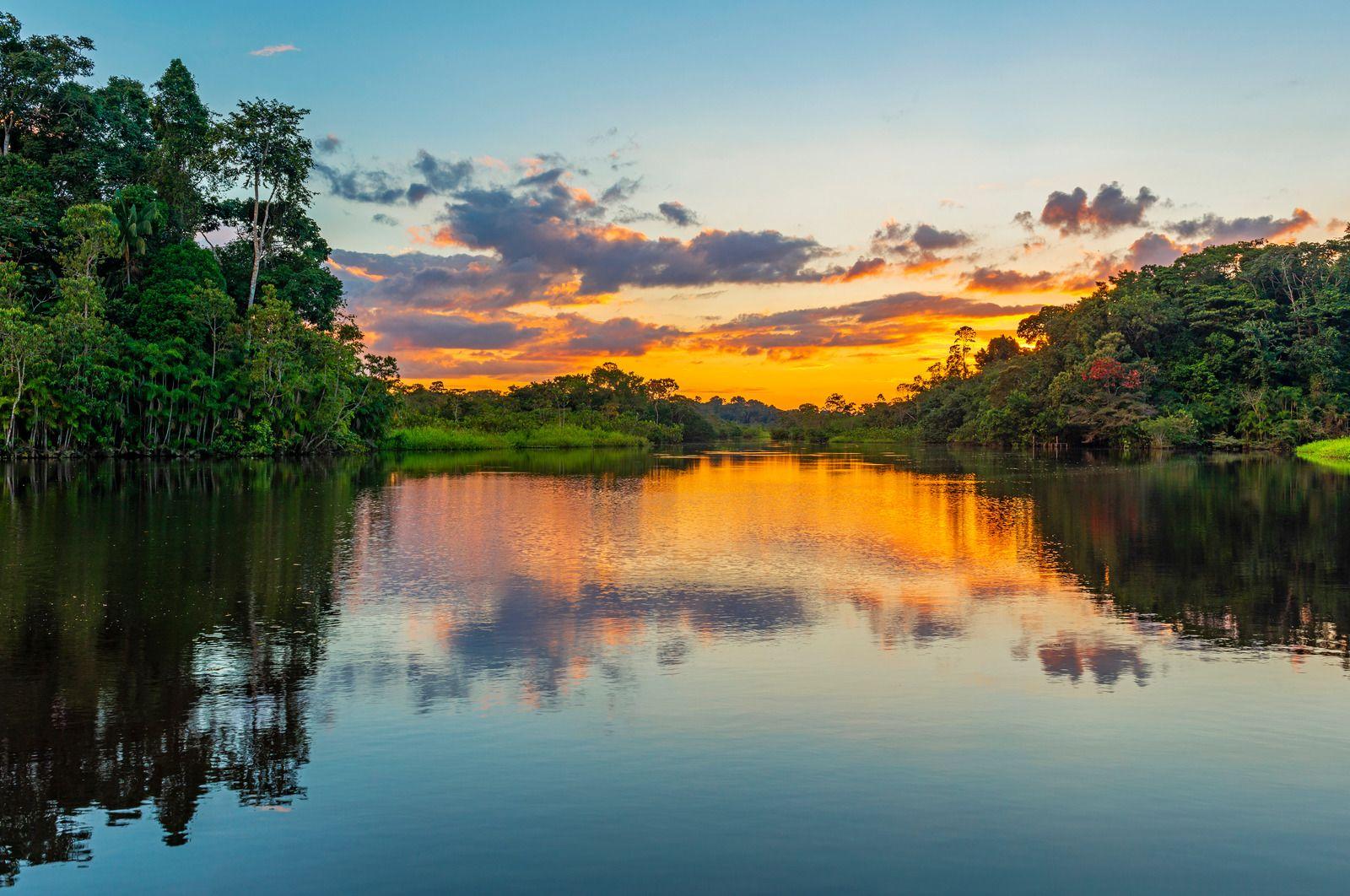 forêt amazonienne.jpg