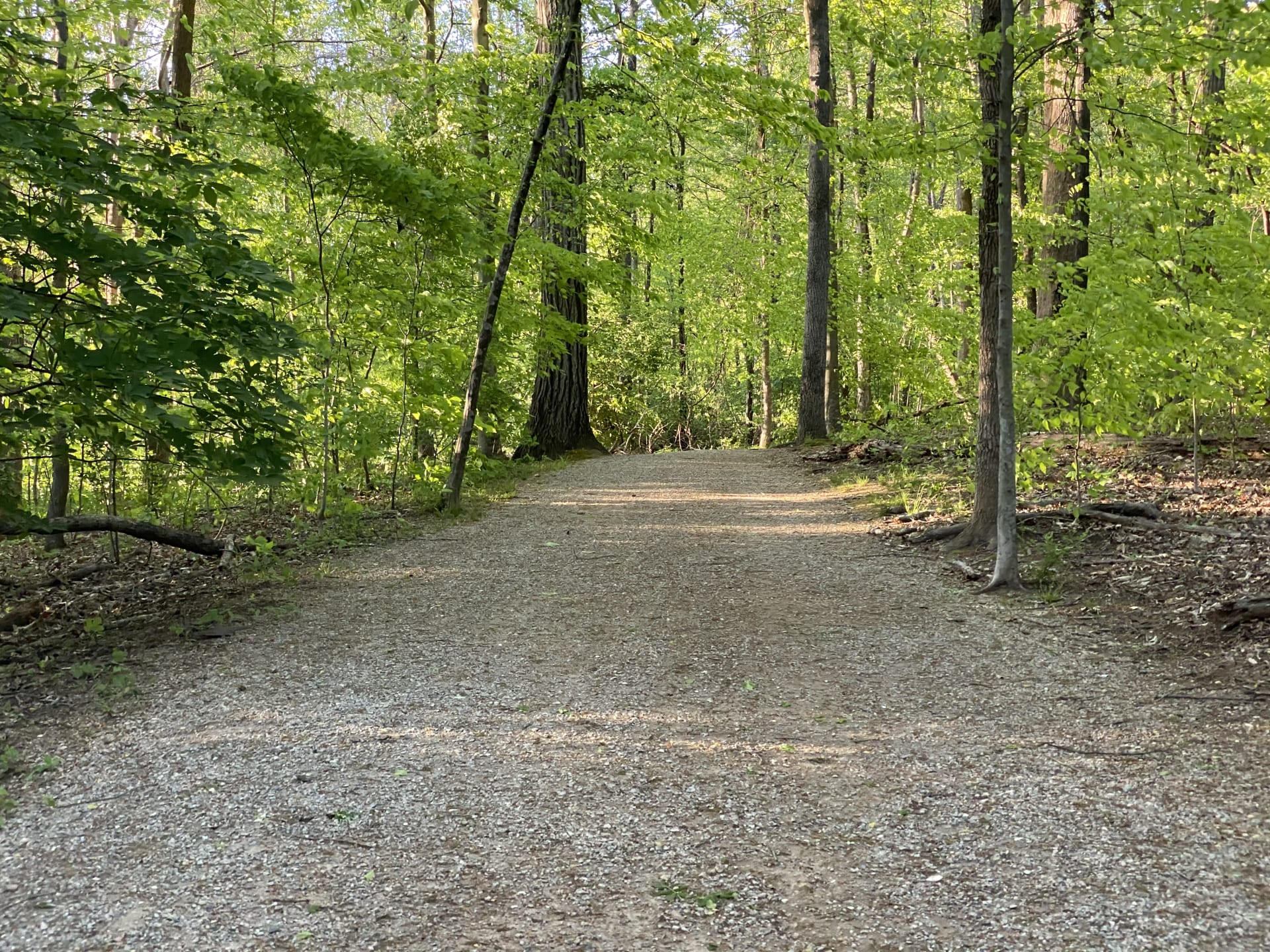 gravel trail in a wooded park