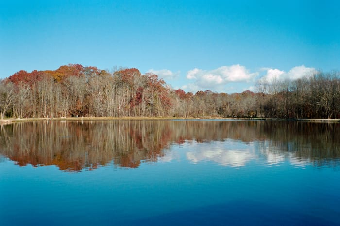 fall trees in recreational park reflected in pond