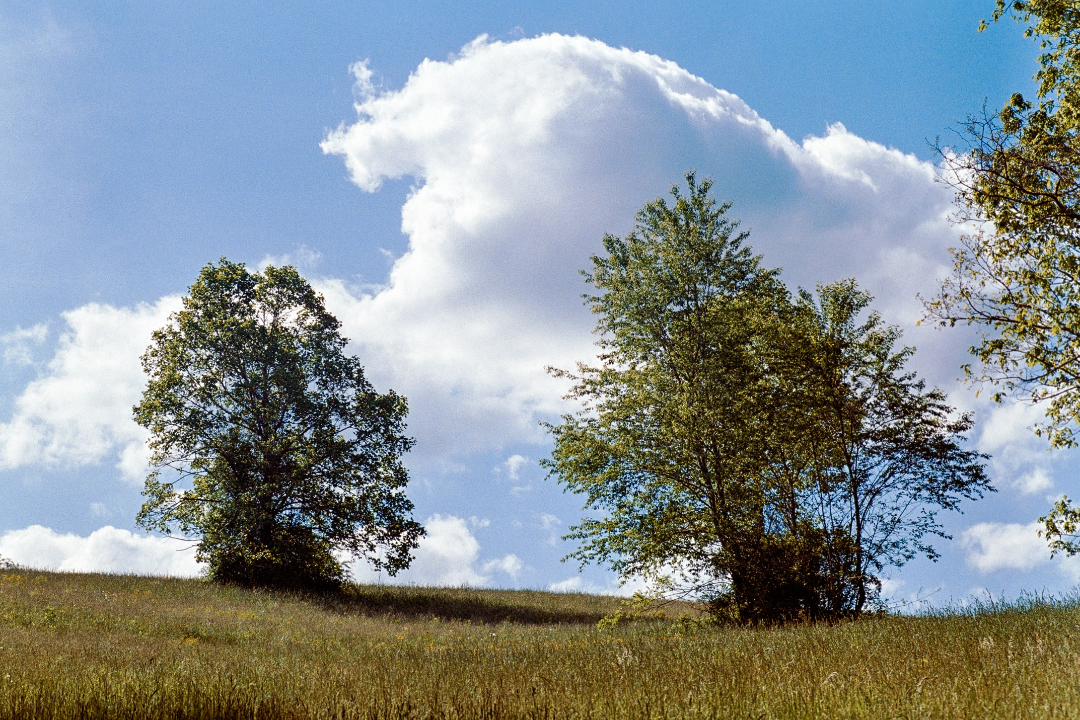 two trees in a meadow with large clouds