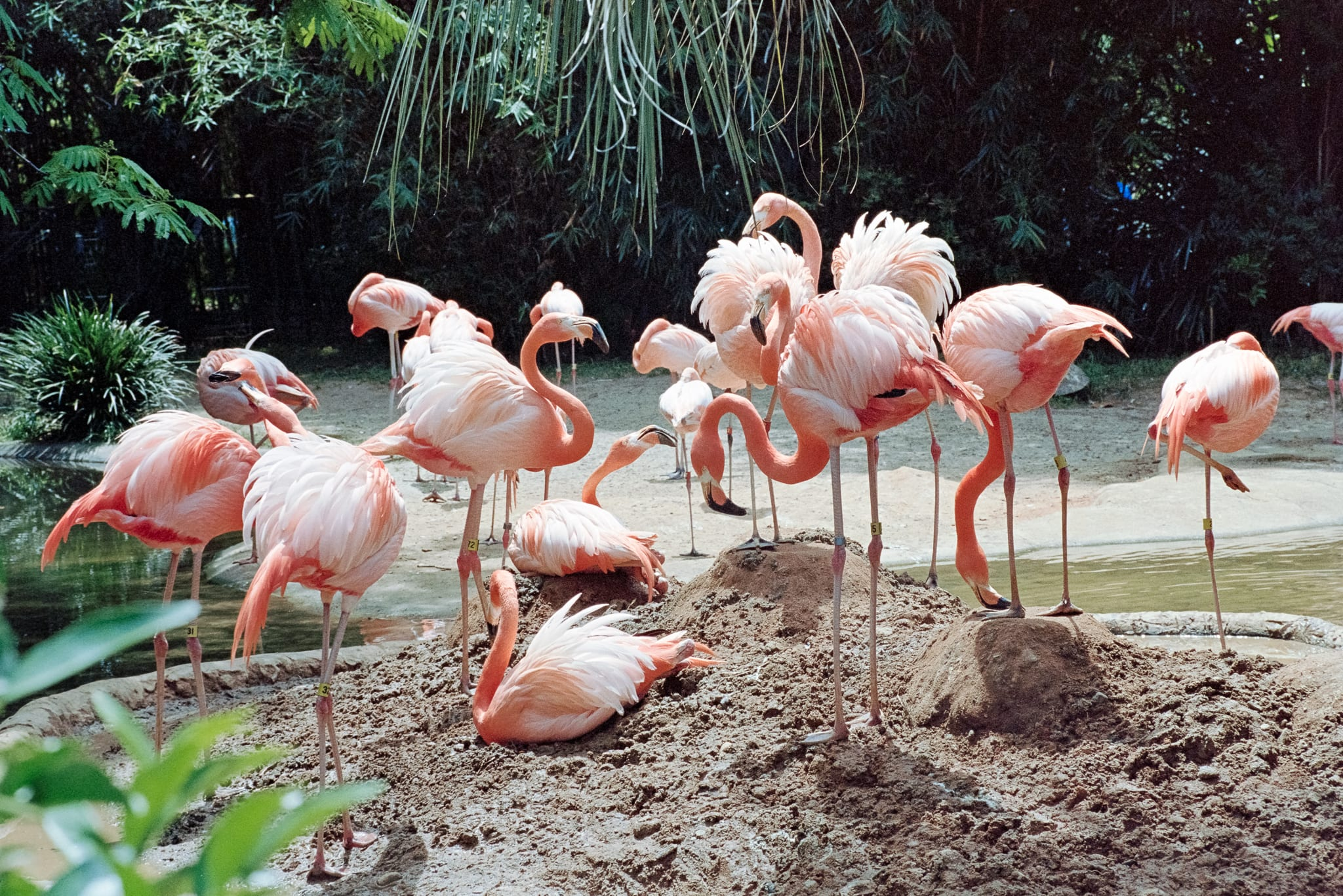 flamingos on a mound of dirt