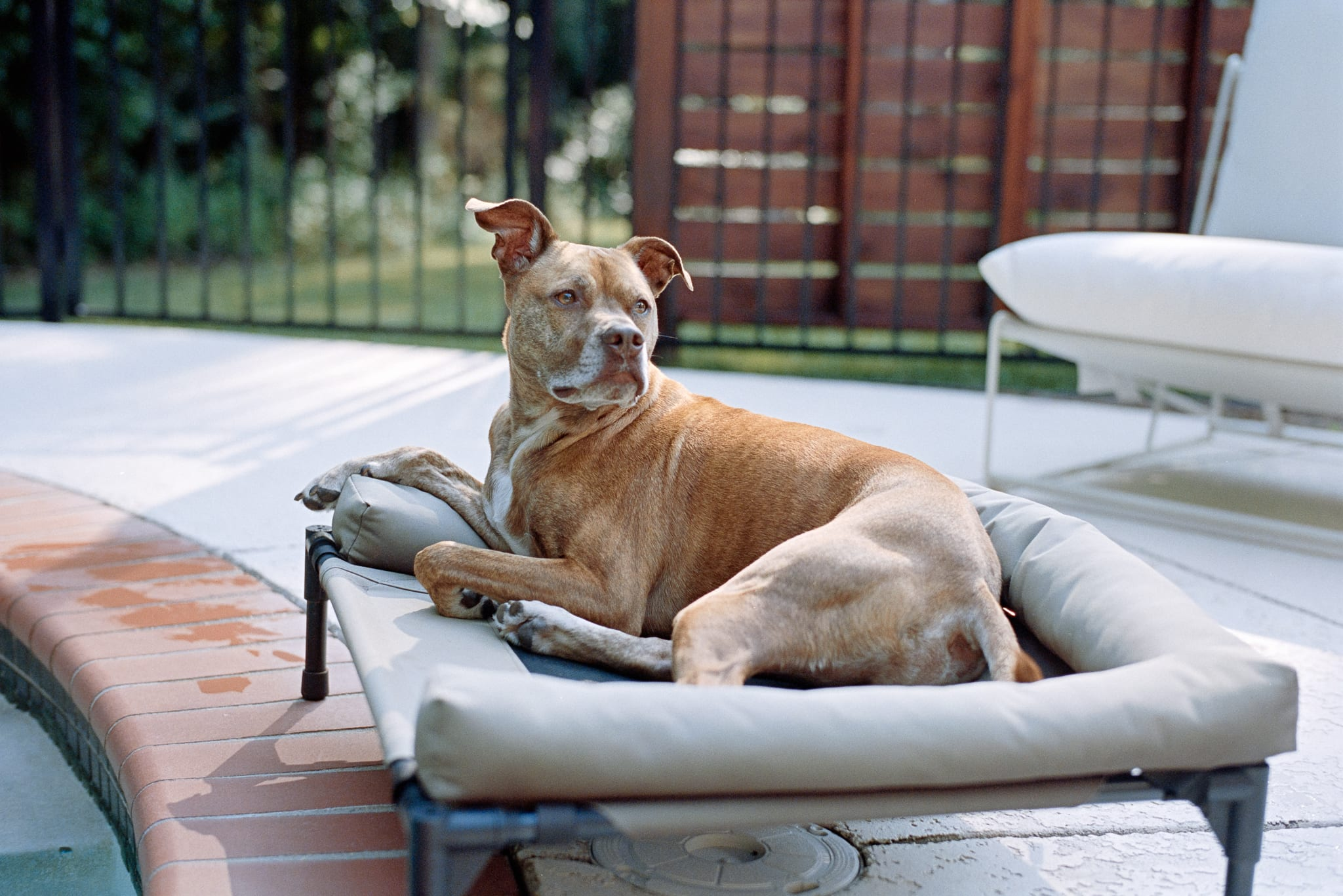 dog on bed by pool