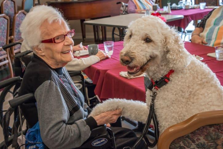 Long Term Care - Pet Companion