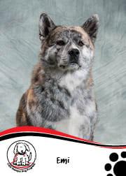 Emi - CGH Therapy Dog