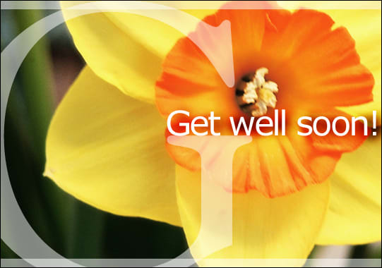 """Get well soon!"" over an image of a daffodil"