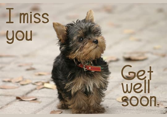Get well card with Yorkie