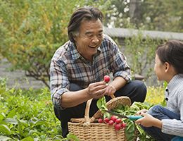 A grandfather picking radishes with his granddaughter.