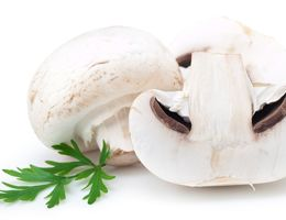 White mushroom.