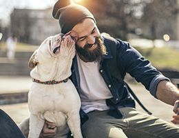 A bulldog licks a man's forehead.