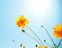 Orange wildflowers against a blue sky.