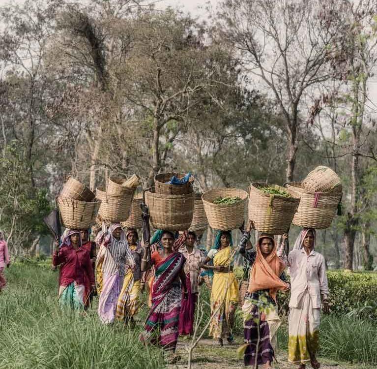 Индия предпринимает ряд инициатив по улучшению качества чая в Ассаме