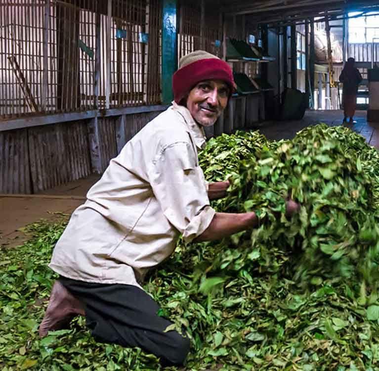 Прозрачность twinings может стать нормой чайной отрасли