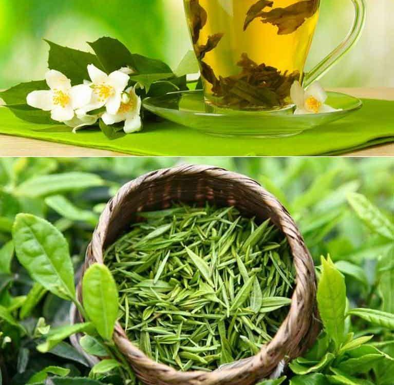 Исследования зеленого чая