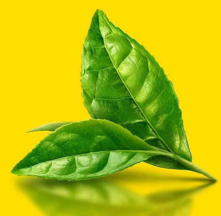 Гормональный балланс организма и зеленый чай