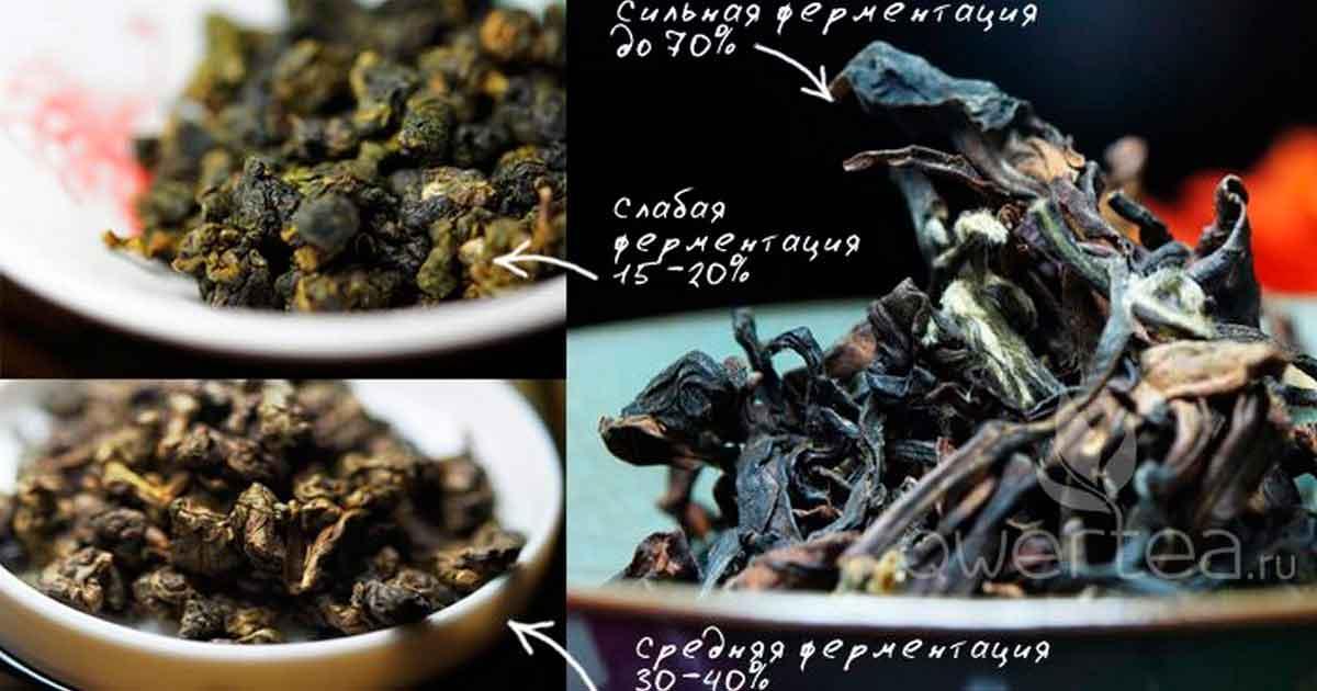Тайваньские улуны: ферментация и прожарка