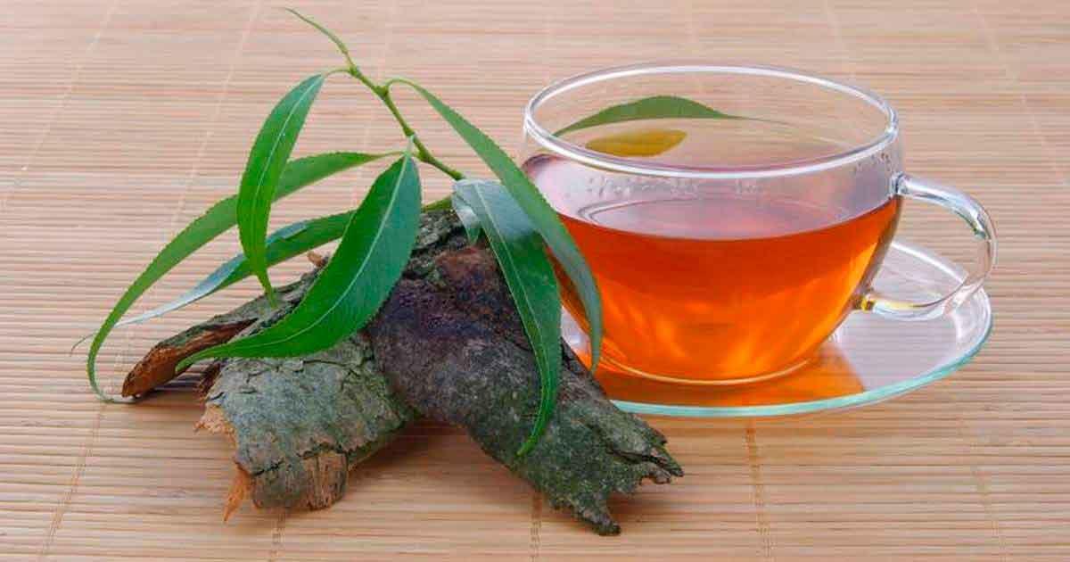 Чай с ивы для красивых ног