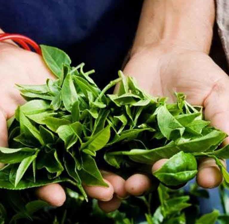 Российскому рынку чая предсказали дестабилизацию из-за запрета поставок из Шри-Ланки
