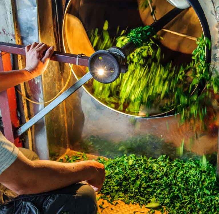 Немного о способах экстракции биологически активных веществ чая