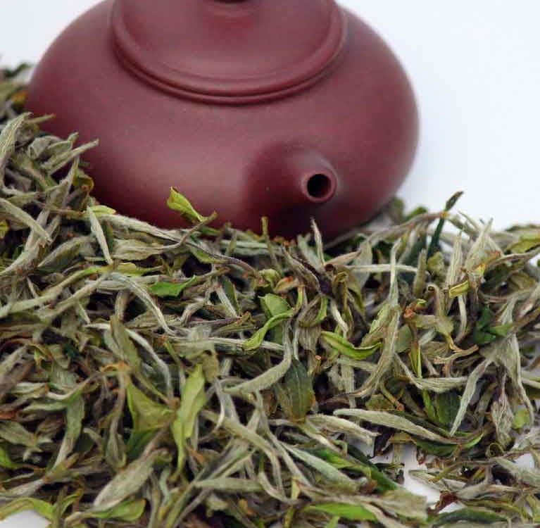 История белого чая из Фудина