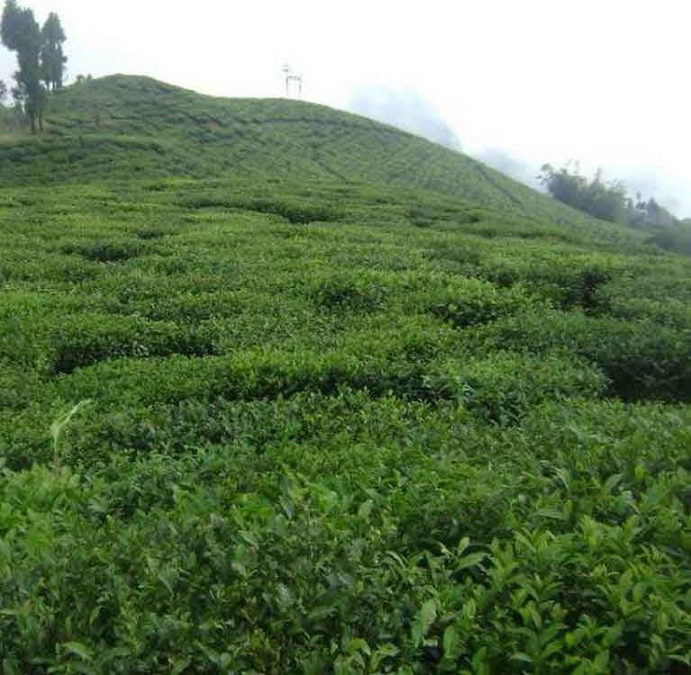 Непальский чай получает собственный товарный знак