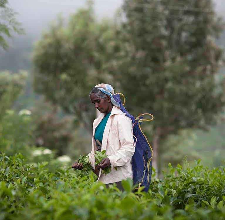 Чай: война новой ОПЕК