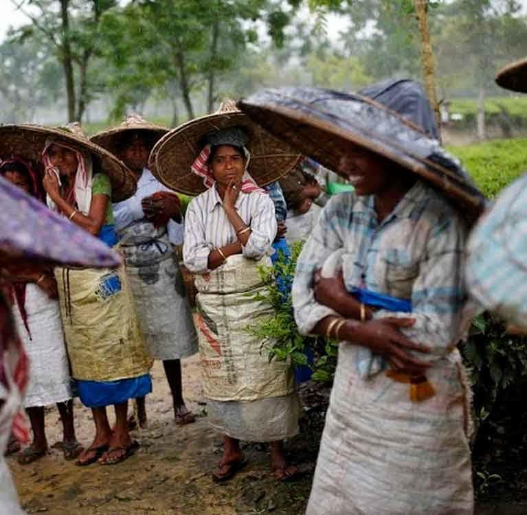 Индийский совет по чаю поможет фермерам пережить климатические изменения