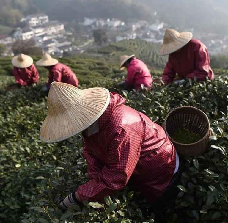Китай увеличил выпуск чайной продукции