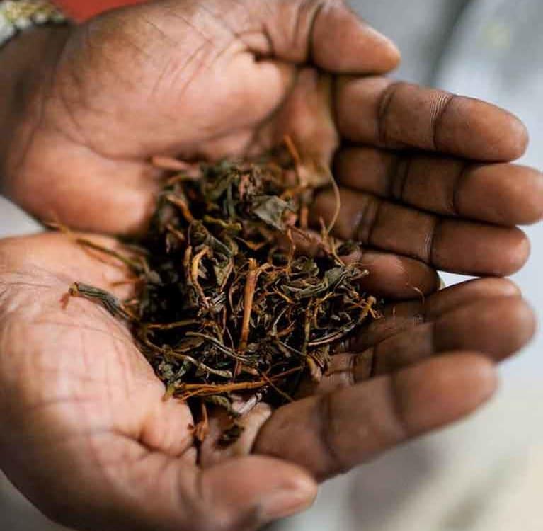 Россельхознадзор разрешил поставки чая из Шри Ланки