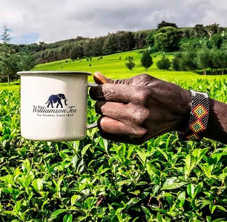 Чайная индустрия Кении избавляется от посредников