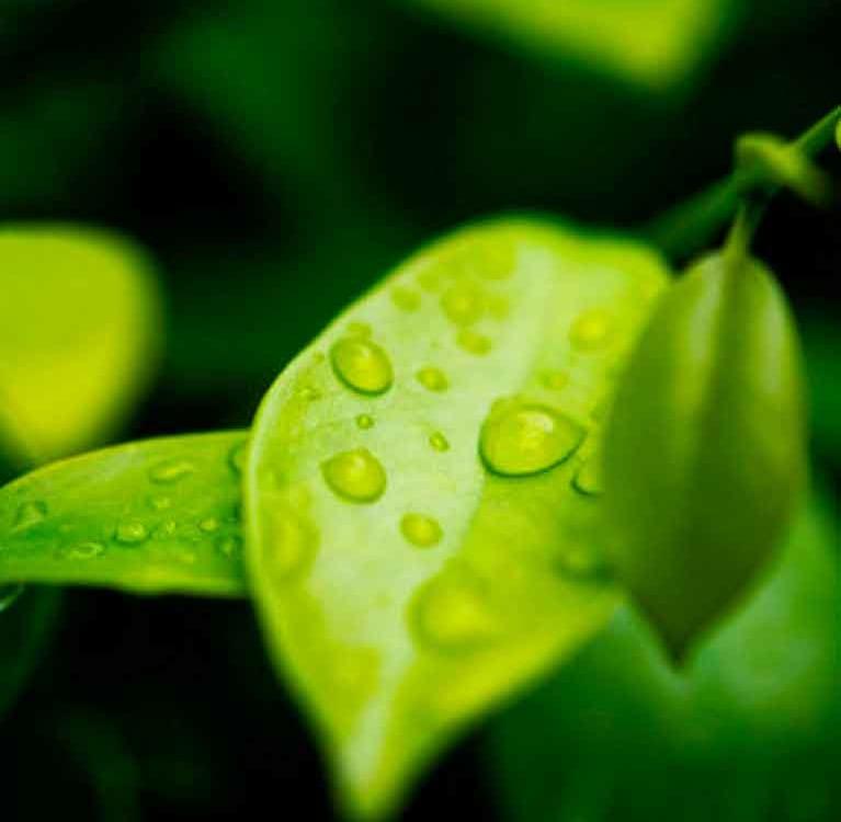 Молоденький листочек
