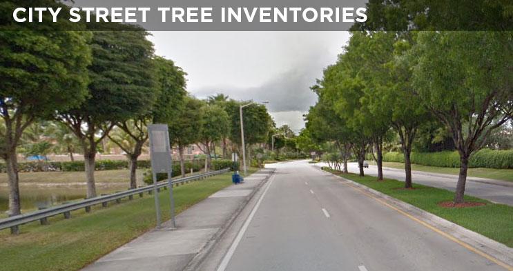 Tree Right of Way