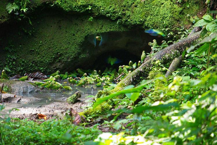 Anakonda Amazon's 4-Day Itinerary Day Three - Parrot Clay Lick.