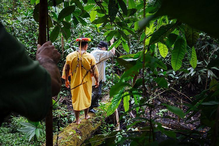 Anakonda Amazon's 8-Day Itinerary Day Two - Guided Jungle Walk.