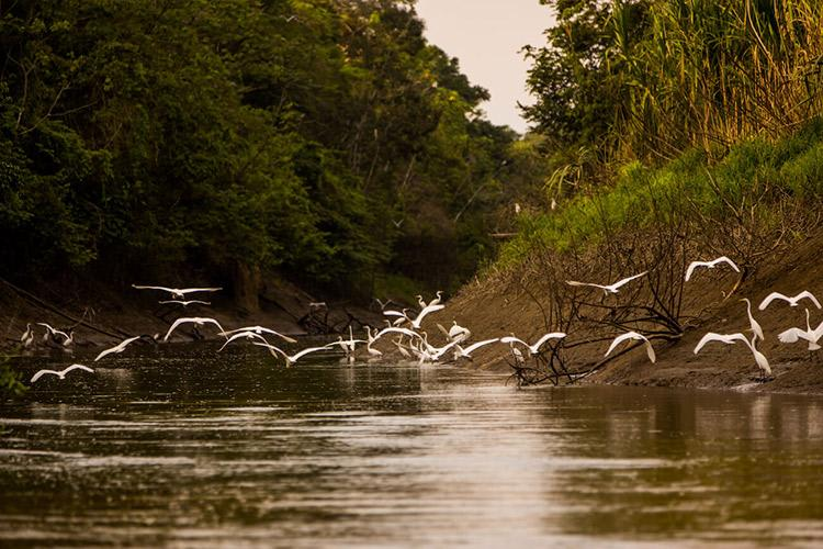 Delfin III Amazon's 4-Day Itinerary Day Two - Bird Sighting.