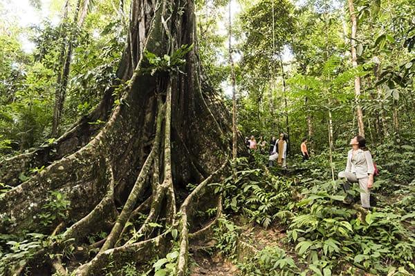 Zafiro's 5-Day Itinerary Day Two - Jungle Walk.