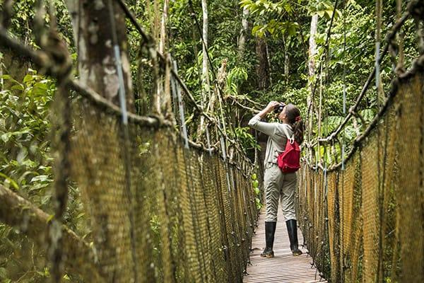 Zafiro's 8-Day Itinerary Day Two - Canopy walk with wildlife.