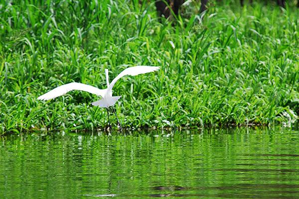 Aqua Nera's 5-Day Itinerary Day Two - Great Egret.