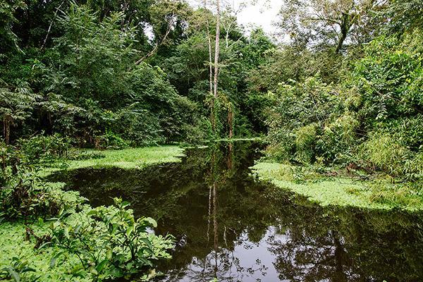 Aqua Nera's 5-Day Itinerary Day Three - Exploring the Amazon.