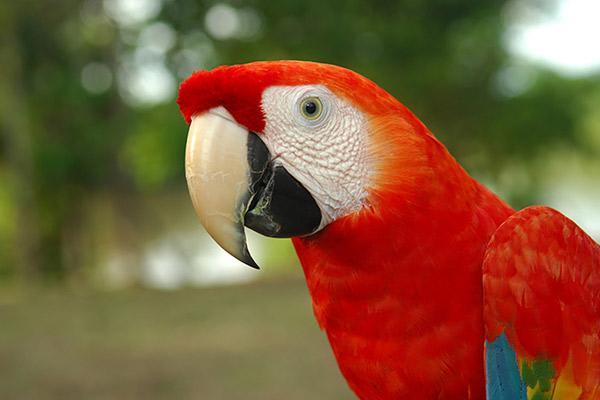 Aqua Nera's 8-Day Itinerary Day Eight - Macaw Sighting.