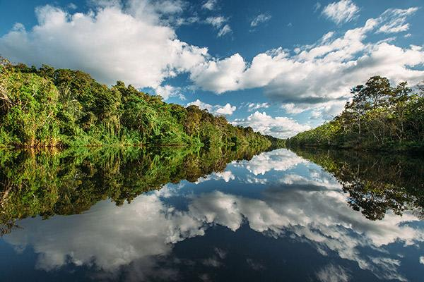 Aqua Nera's 8-Day Itinerary Day Seven - Mirrored Forest of the Amazon River.