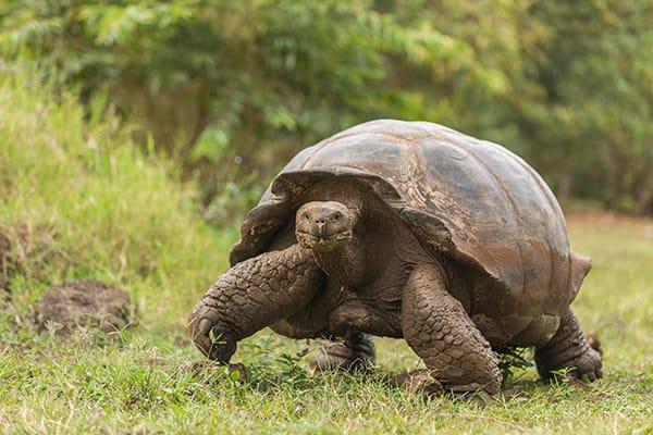 Origin's 8-Day Itinerary B Day Seven - Giant Tortoise Sighting.