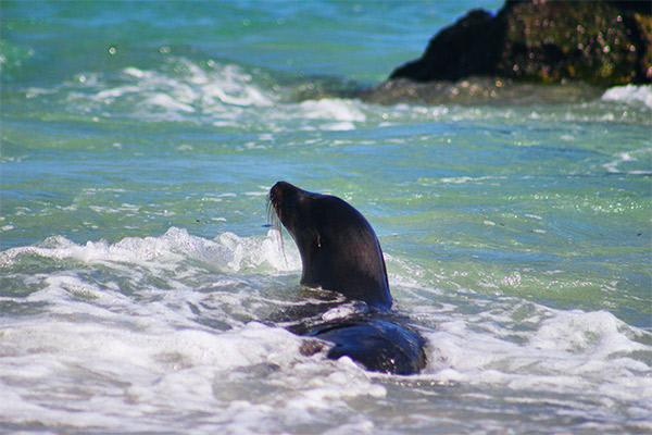 Petrel's 4-Day Itinerary Day Two - Sea Lion Sighting.