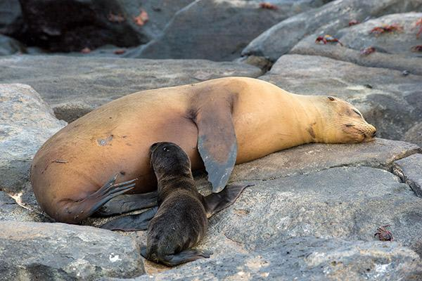 Petrel's 8-Day Itinerary B Day Two - Sea Lion Puppies.