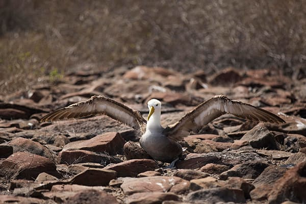 Infinity's 5-Day Itinerary Day Four - Albatross Sighting.