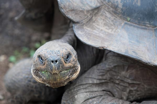 Infinity's 8-Day Itinerary B Day Three - Giant Tortoise Close Up.