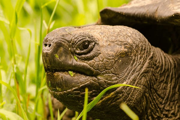 Calipso's 4-Day Itinerary Day Three - Giant Tortoise Extremely Close Up.